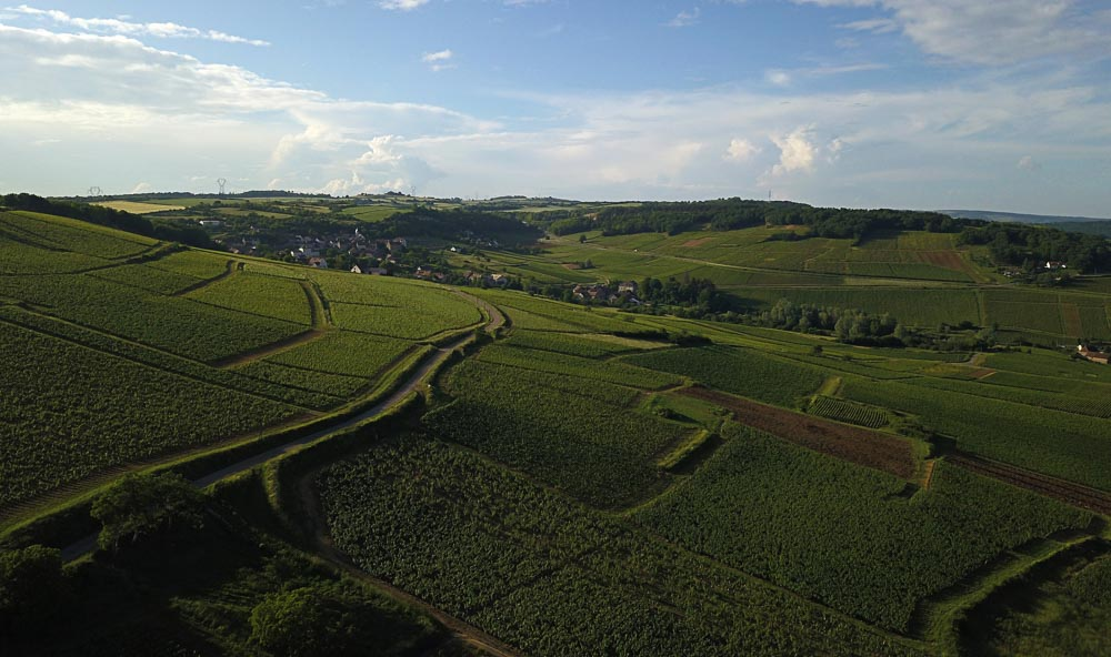 Montagny, vineyard, Burgundy